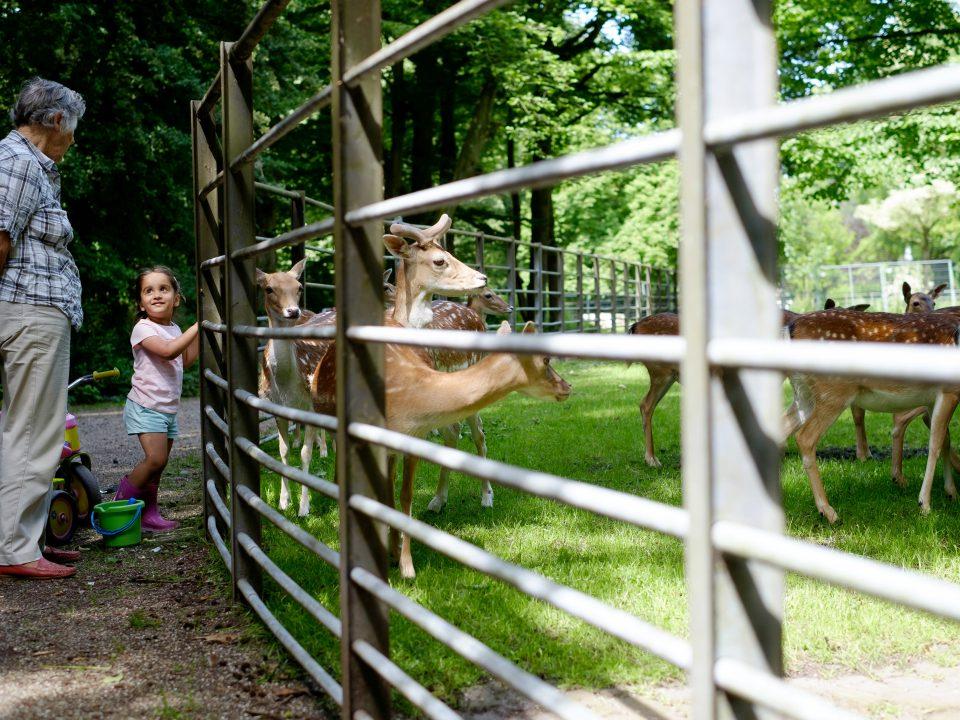 Dordrecht - stadsbeeld - Park Merwestein - kinderen - herten