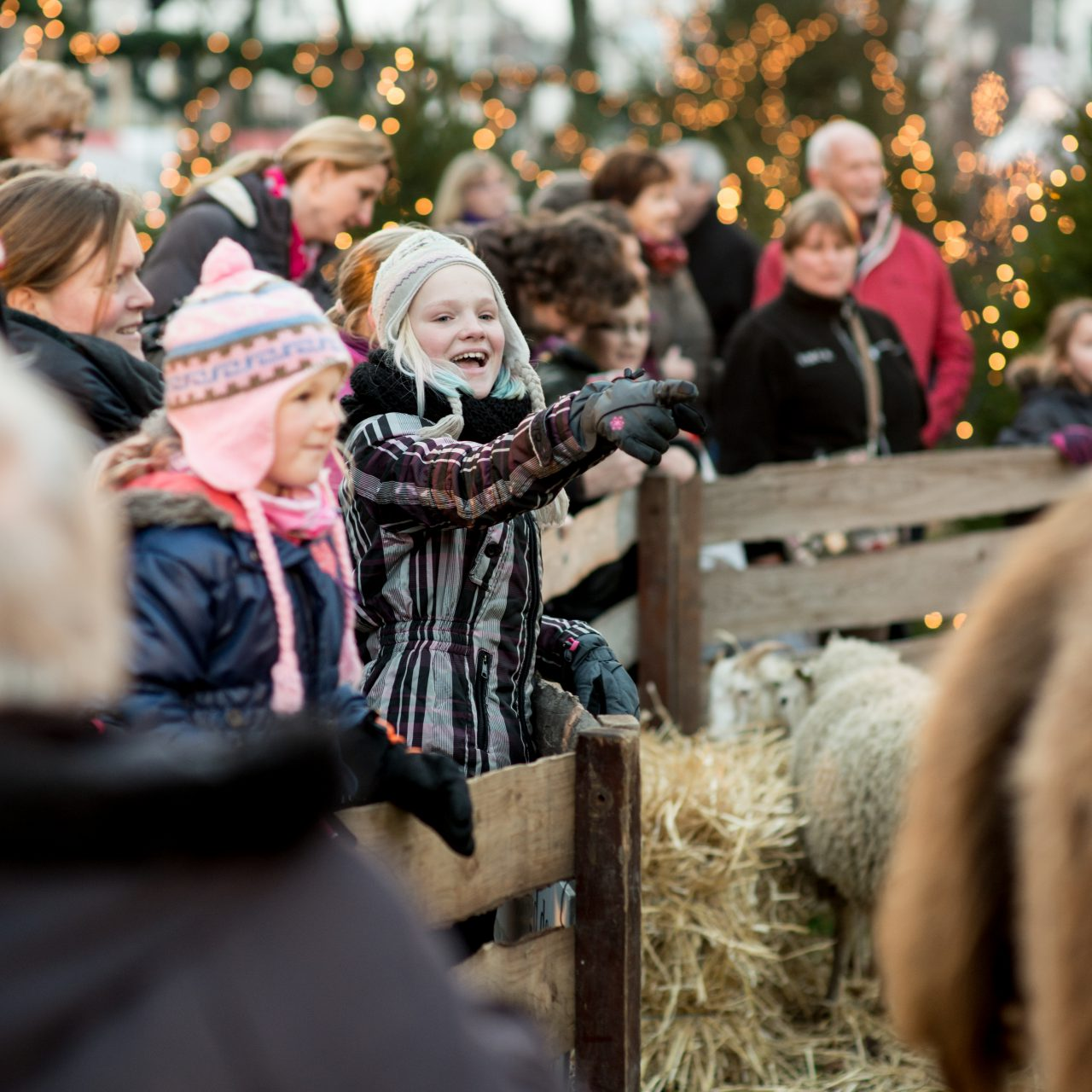 Kerstmarkt Dordrecht - Dordrecht - evenementen - kerststal - Grotekerkstuin